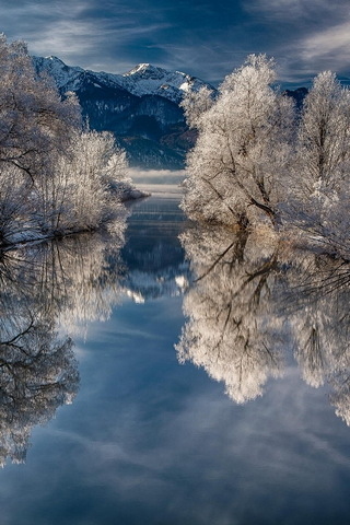 Snow Tree Reflection