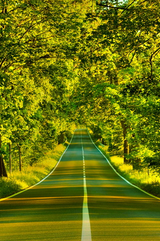Green Summer Road