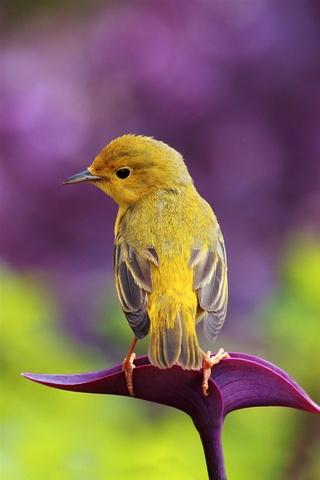 นกเล็ก