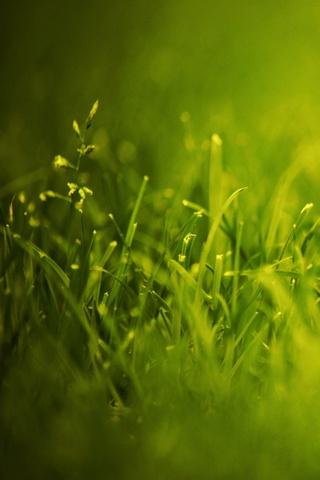 Elektrik yeşil