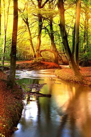 Wald Hintergrund Lade Auf Dein Handy Von Phoneky Herunter