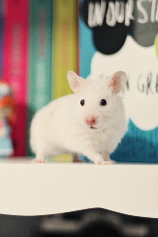 Small Rats (White)