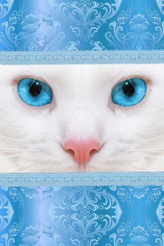 White Cat, Blue Eyes 640х960