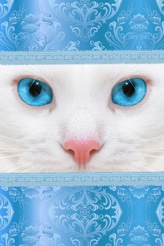 Kucing Putih, Mata Biru 640х960
