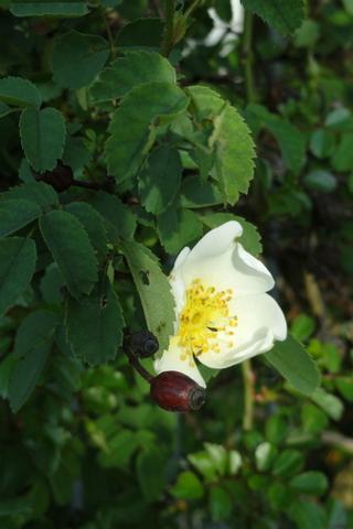 Hoa màu trắng