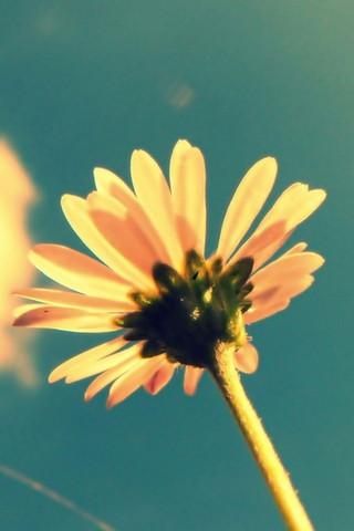 Retro Kwiat