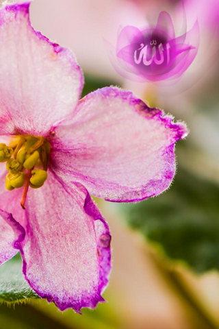 Flor de Allah