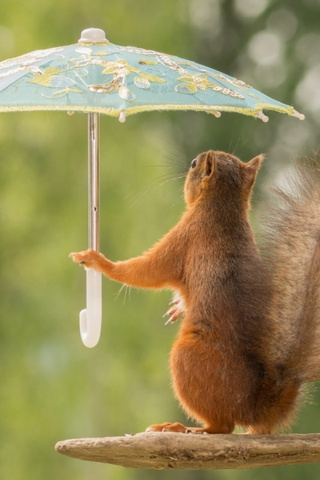 Squirrel&umbrella