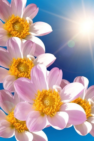 Soleil de printemps