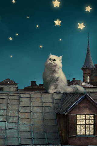 Night Cat