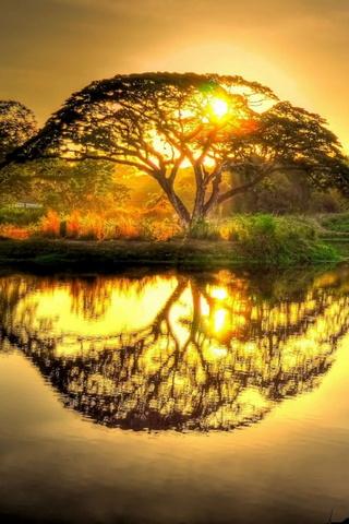 Wild Sunrise