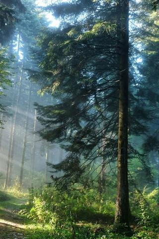 Dichter Wald Hintergrund Lade Auf Dein Handy Von Phoneky Herunter