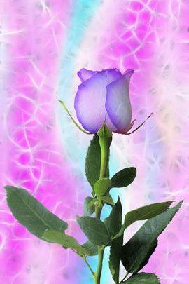 Wispy Rose