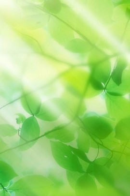 Greenly Leaves