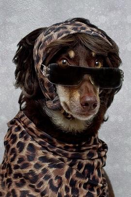 Anjing comel