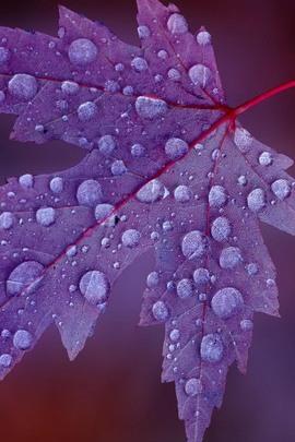 पाऊस नंतर लीफ