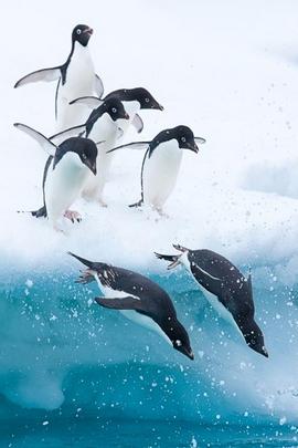 Paradise Ice Sea