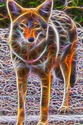Fractal Coyote