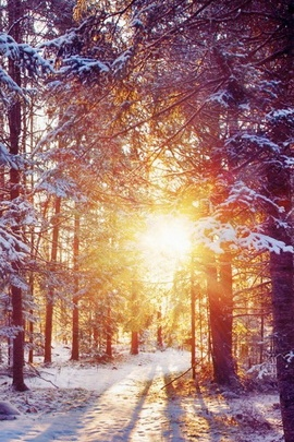 Winter Dawn IPhone 6 Wallpapers