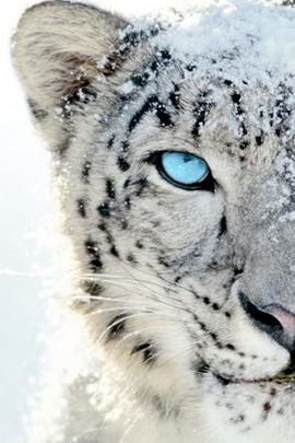 ดวงตาสีฟ้า