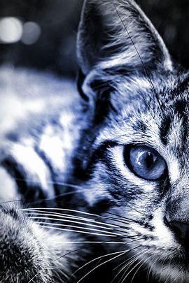 고양이 눈