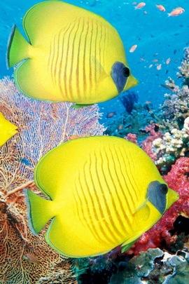 Żółta ryba podwodna