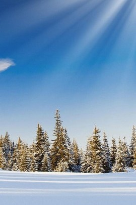 Güneş lekesi kar