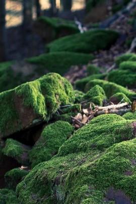 Green Moss Stone