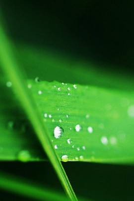 Watery Green Leaf