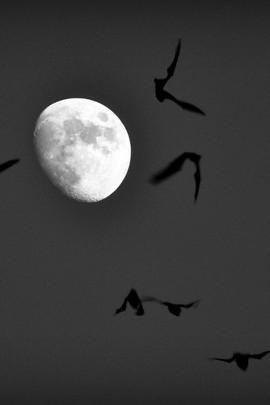 Karanlık ay