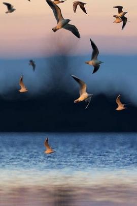 Landscape Birds