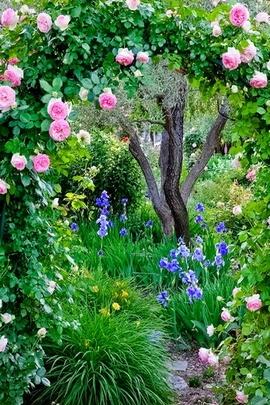 ازهار الربيع