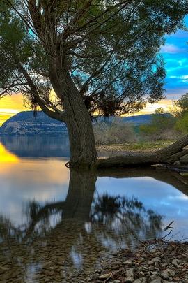 Treesbythewater