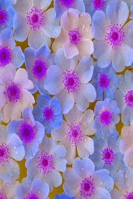 Purple & Blue Flowers