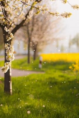 Fallende Blütenblätter