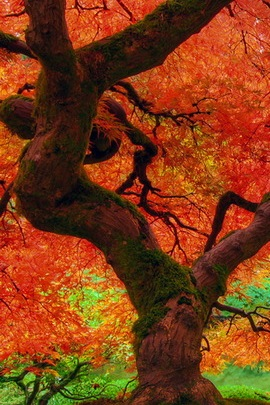 Mùa thu lớn cây cối