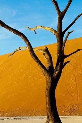 Tree In Desert Wallpaper