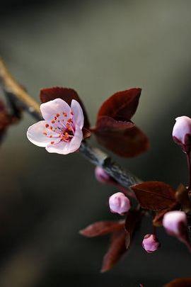 Bunga musim bunga