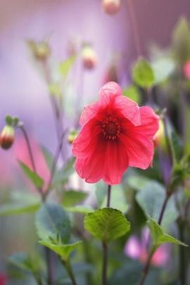 वसंत के फूल