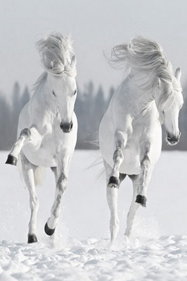 Snow And Horses