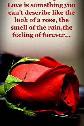 Feeling Of Forever