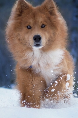 Snowy Puppy