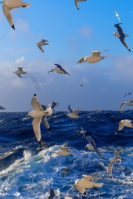 Paradise Sea Birds