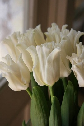 Весняні квіти