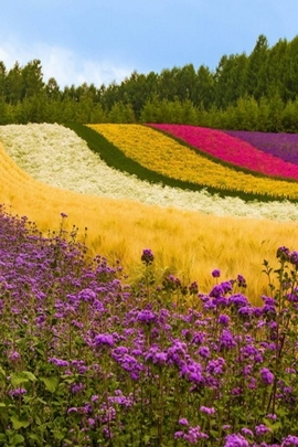 Colurful Landscape