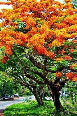 Springr Tree