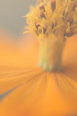 Flower Yell