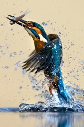 Water Bird Ip