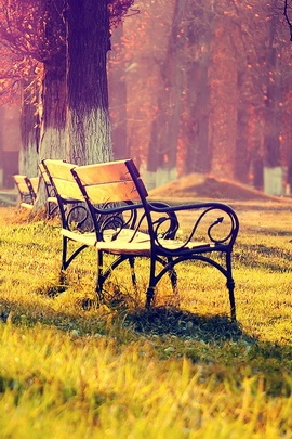 Autumn Park Landscape Wooden Bench