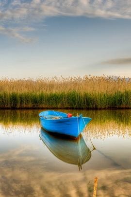 ブルーボート
